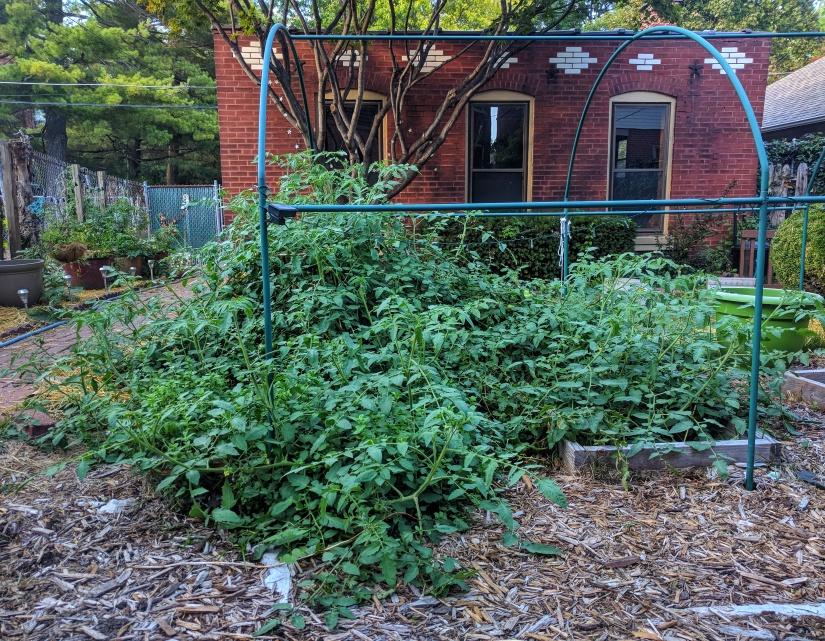 October vines front